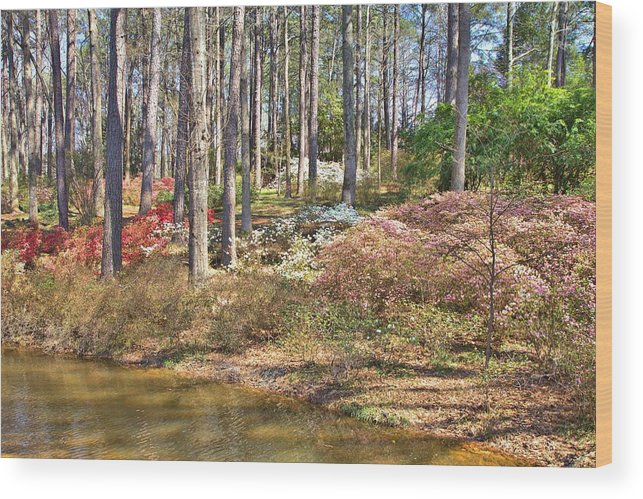8213 Wood Print featuring the photograph Azaleas By The Pond's Edge by Gordon Elwell