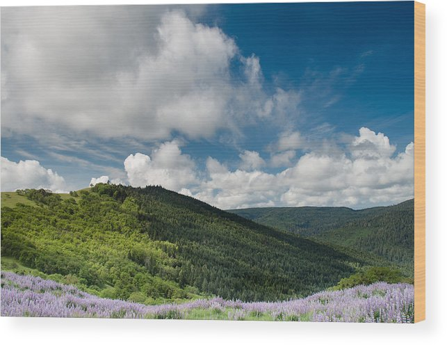 Lupine Wood Print featuring the photograph Bald Hills In Spring by Greg Nyquist