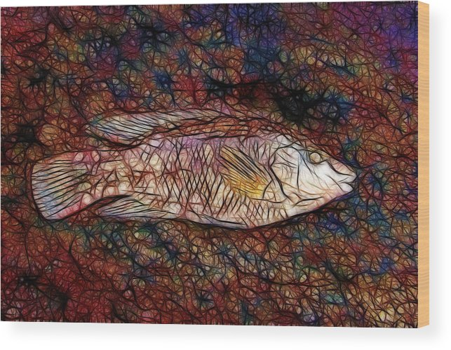 Wrasse Phone Case Wood Print featuring the photograph Ballan Wrasse by Dave Wilkinson