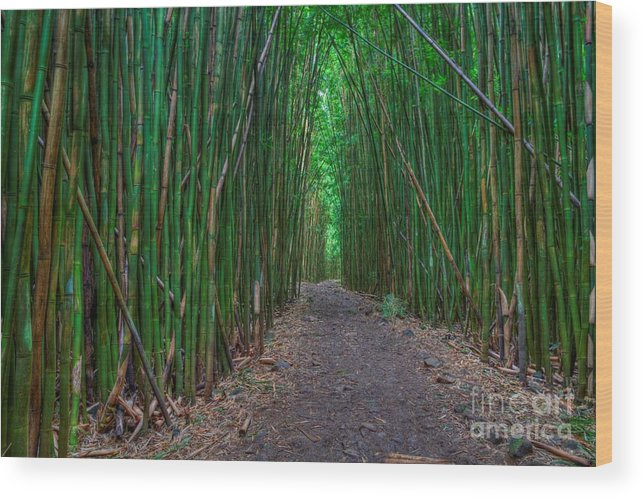 Bamboo Forest Wood Print featuring the photograph Bamboo Bliss by James Anderson