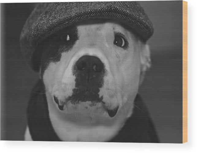 Dog Wood Print featuring the photograph Be Cool by Jean-Pierre Mouzon