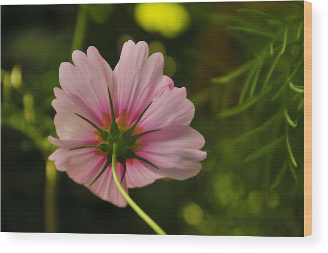 Flower Wood Print featuring the photograph Behind by Mike Martin