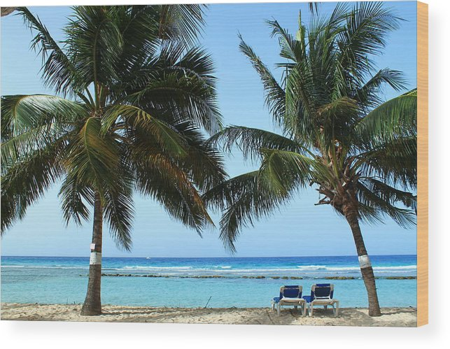 Barbados Wood Print featuring the photograph Between The Palms by Catie Canetti