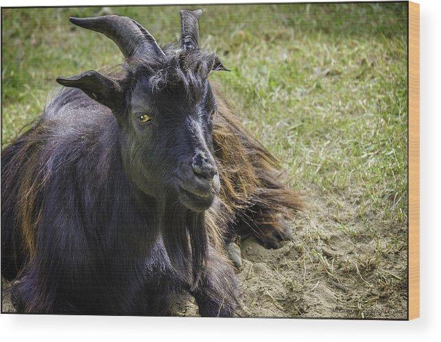 Goat Wood Print featuring the photograph Billy The Kid by LeeAnn McLaneGoetz McLaneGoetzStudioLLCcom