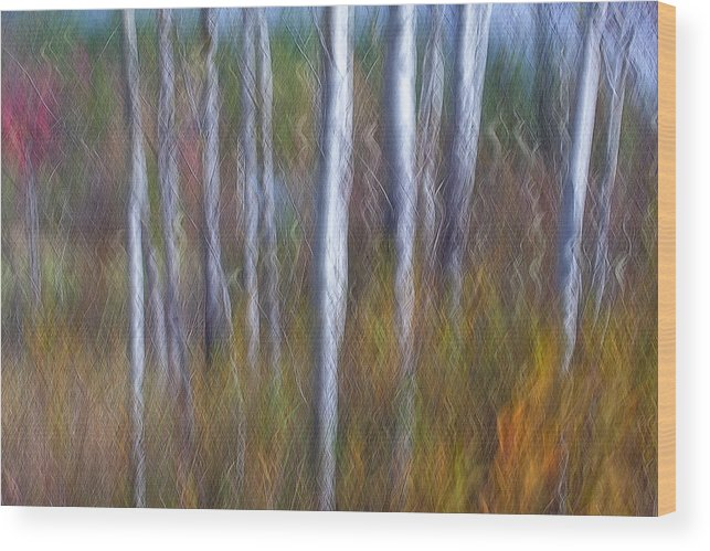 New England Wood Print featuring the photograph Birch Fall Abstract by Scott Snyder