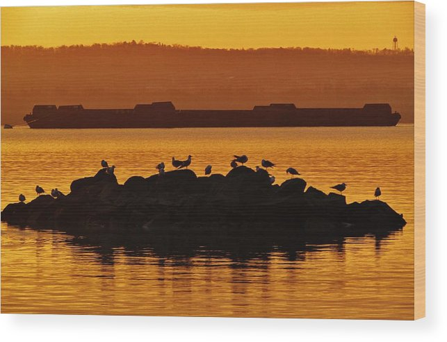 Rockland County Landscapes Wood Print featuring the photograph Bird Rock by Thomas McGuire