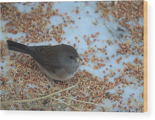 Bird Wood Print featuring the photograph Black Eyed Junco by Bonfire Photography