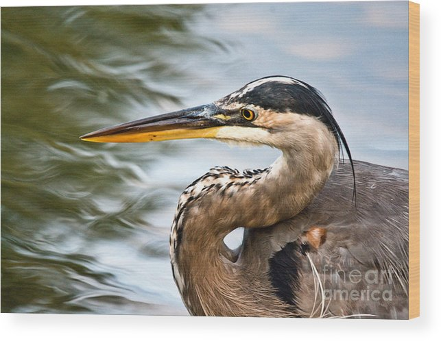 Wood Print featuring the photograph Blue And Swirly Water by Cheryl Baxter