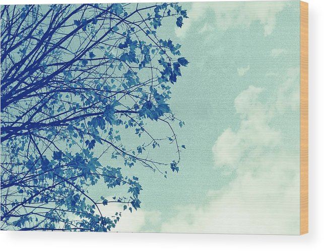 Trees Wood Print featuring the photograph Blue Branches by Cathie Tyler