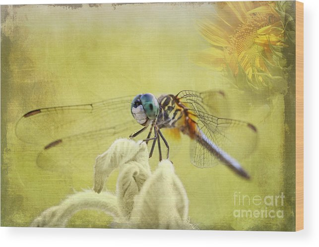 Blue Wood Print featuring the photograph Blue Dasher by Pamela Gail Torres