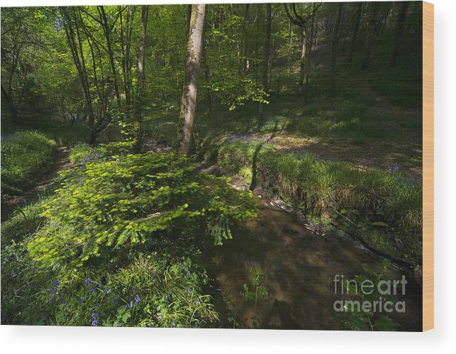 Bluebell Wood Print featuring the photograph Bluebell Wood by Rob Hawkins