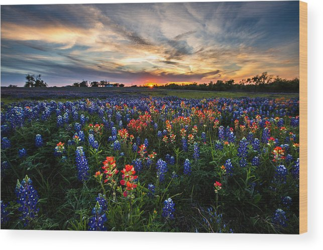 Wildflower Wood Print featuring the photograph Bluebonnet Glory by Chris Multop