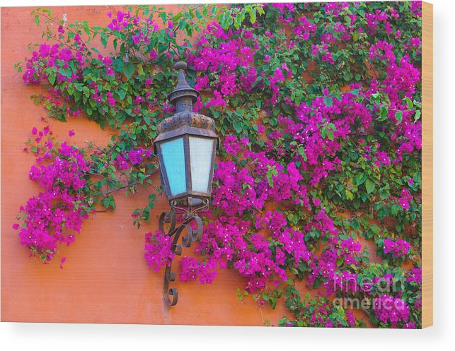 Travel Wood Print featuring the photograph Bougainvillea And Lamp, Mexico by John Shaw