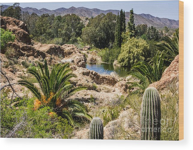 Boyce Thompson Wood Print featuring the digital art Boyce Thompson Desert Vista by Georgianne Giese