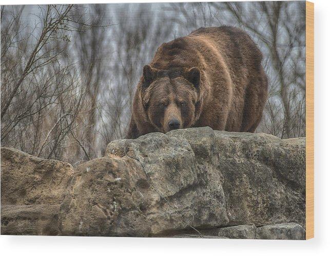 Brown Bear Wood Print featuring the photograph Brown Bear by Garett Gabriel