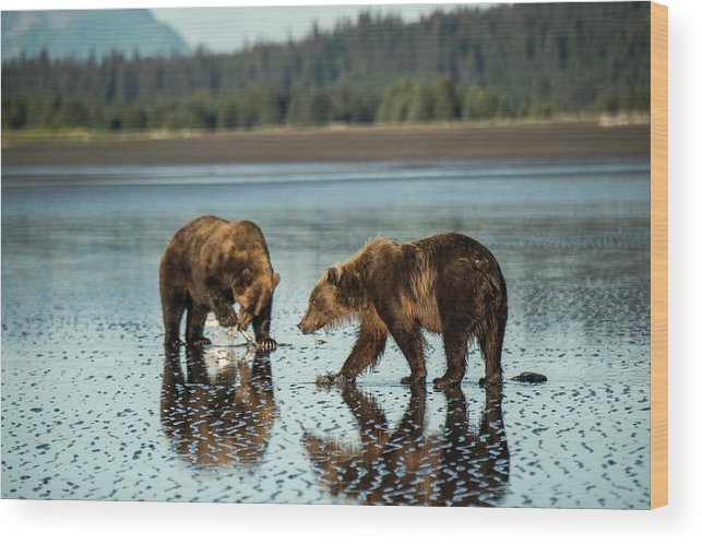 Animals In The Wild Wood Print featuring the photograph Brown Bear, Ursus Arctos, Walking by Bob Smith