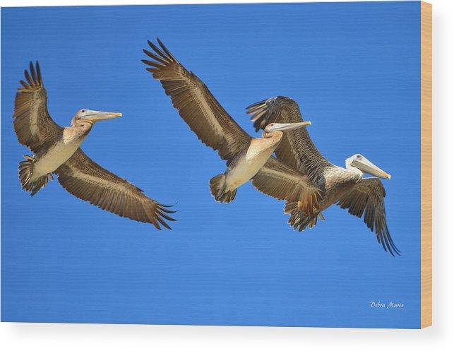 Brown Pelicans Wood Print featuring the photograph Brown Pelicans In Flight by Debra Martz