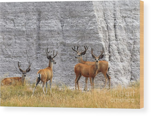 Wildlife Wood Print featuring the photograph Bucks Abound by Deanna Cagle