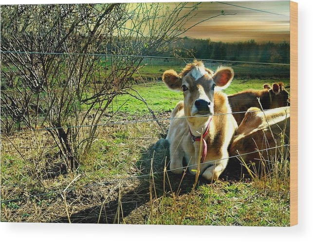 Cow Wood Print featuring the photograph Buttercup by Diana Angstadt