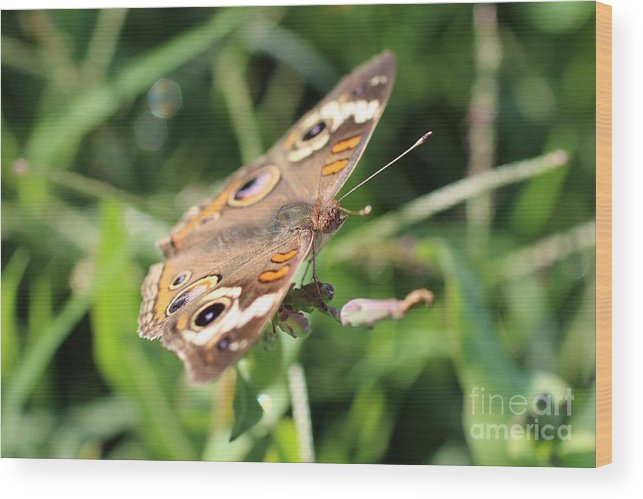 Butterfly Wood Print featuring the photograph Butterfly Eyes by Jennifer Churchman