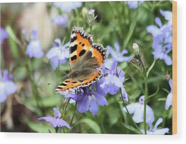 Butterfly Wood Print featuring the photograph Butterfly On Blue Flower by Gordon Auld