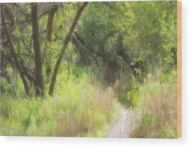 Wood Print featuring the photograph Buttonwood Forest by Rudy Umans
