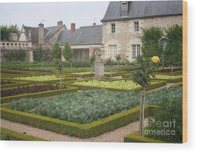 Cabbage Wood Print featuring the photograph Cabbage Garden Chateau Villandry by Christiane Schulze Art And Photography