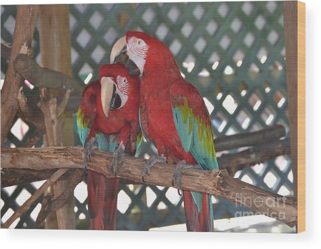 Birds Wood Print featuring the photograph Can You Get That Itch For Me? by Dennis Godin