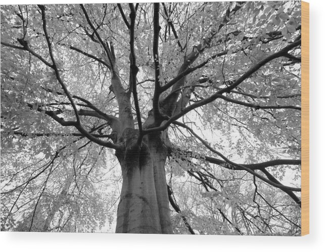 Black Wood Print featuring the photograph Canopy by Dwight Pinkley