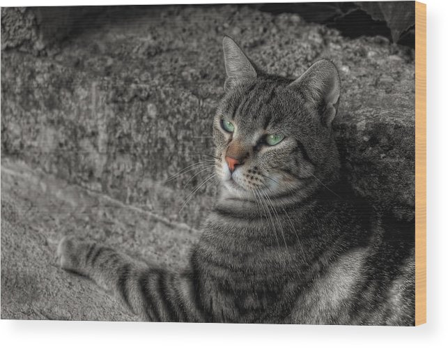 Wood Print featuring the photograph Cat Bicolored by Leonardo Marangi