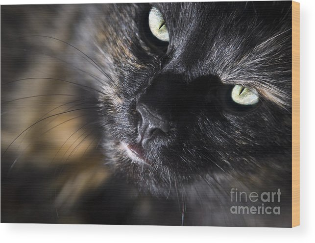 Animal Wood Print featuring the photograph Cat Looking Up by Tim Hester