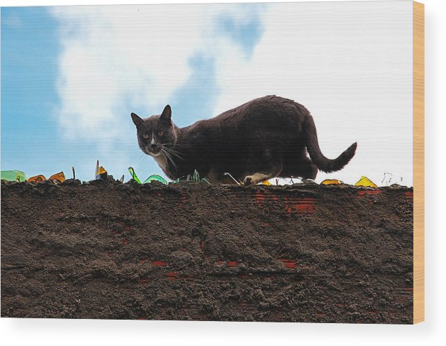 Cat Wood Print featuring the photograph Cat On A Wall by Ammar Al Fakhuri