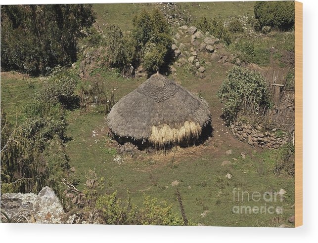 Cattle Shelter Wood Print featuring the photograph Cattle Shelter, Ethiopia by Brian Gadsby