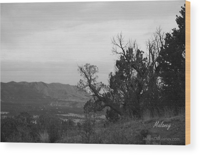 Black And White Photo Wood Print featuring the photograph Cedars by James Mulaney