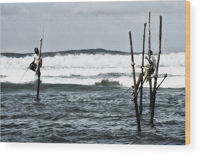 Fish Wood Print featuring the photograph Chat And Fish by Thierry CHRIN