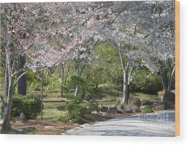 Flowers Wood Print featuring the photograph Cherry Lane Series Picture H by Barb Dalton
