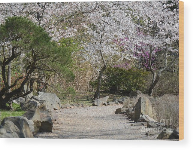 Flowers Wood Print featuring the photograph Cherry Lane Series Picture J by Barb Dalton