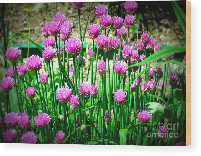 Chives Wood Print featuring the photograph Chives by Christy Beal