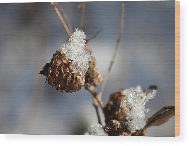 Outdoors Wood Print featuring the photograph Close-up Of Wilted Plant by Renee Heetfeld / EyeEm