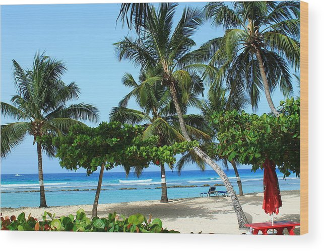 Barbados Wood Print featuring the photograph Closed Umbrella by Catie Canetti