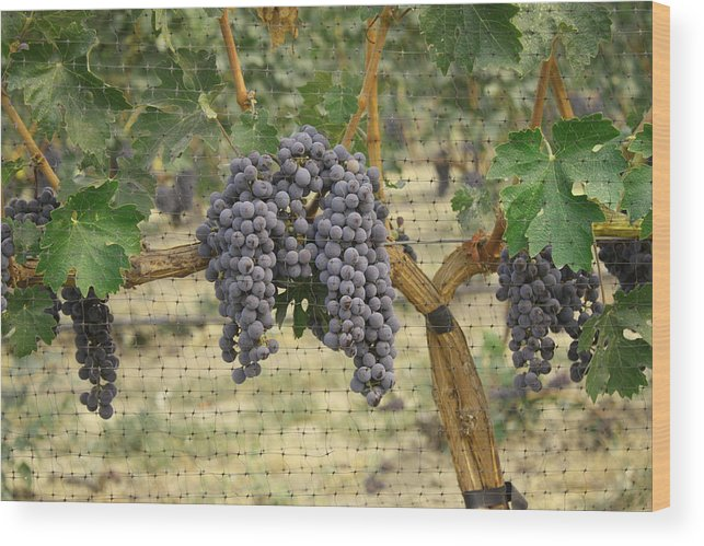 Grapes Wood Print featuring the photograph Clusters by Rick Hale