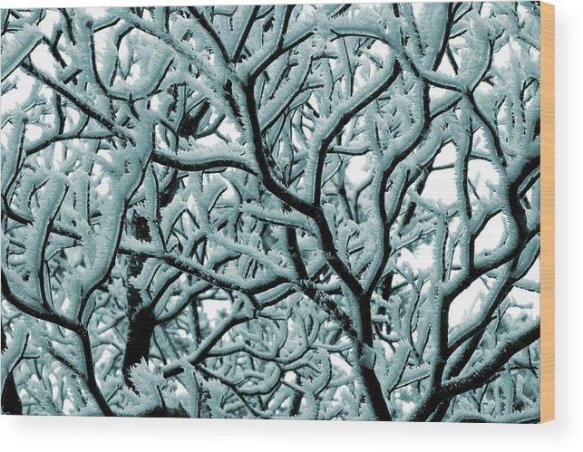 Frosted Tree Wood Print featuring the photograph Cold Frosted Limbs Above by Michael Eingle