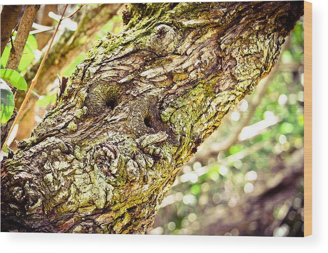 Wood Print featuring the photograph Collier-seminole Sp 12 by Becky Anders