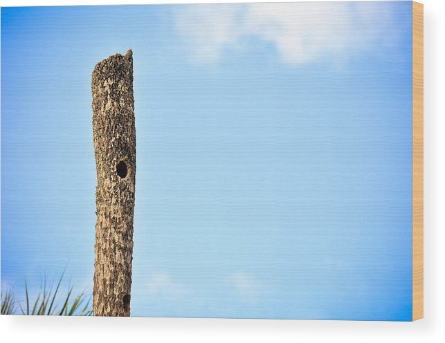 Wood Print featuring the photograph Collier-seminole Sp 25 by Becky Anders