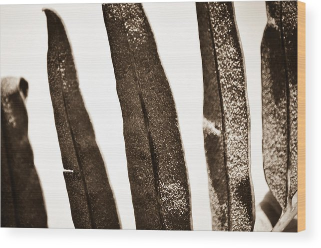 Wood Print featuring the photograph Collier-seminole Sp 29 by Becky Anders