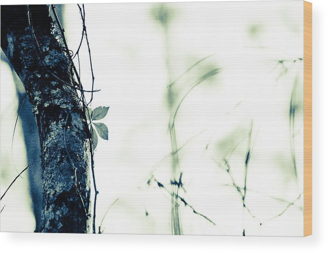 Wood Print featuring the photograph Collier-seminole Sp 3 by Becky Anders