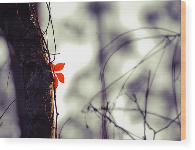 Wood Print featuring the photograph Collier-seminole Sp 4 by Becky Anders
