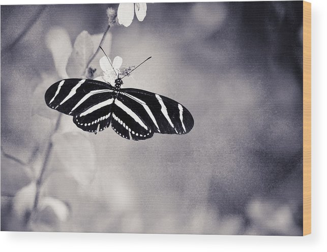 Wood Print featuring the photograph Collier-seminole Sp 5 by Becky Anders
