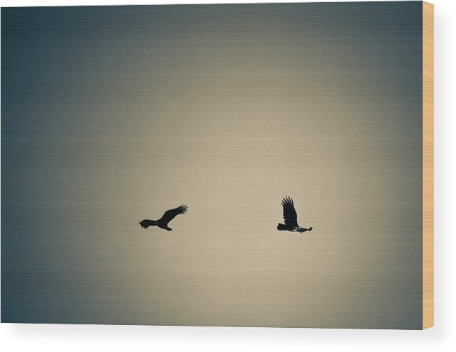 Wood Print featuring the photograph Collier-seminole Sp 6 by Becky Anders