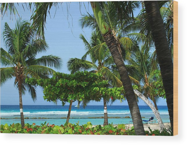 Barbados Wood Print featuring the photograph Colorful Greens And Blues by Catie Canetti